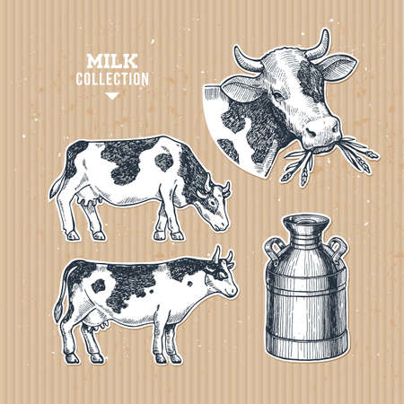 Milk farm collection. Cow engraved illustration. Vintage husbandry. Vector illustration