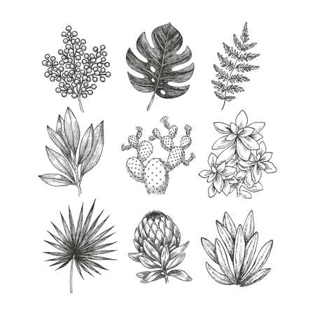 Hand drawn plant and flower collection. Vintage engraved floral set. Vector illustration.