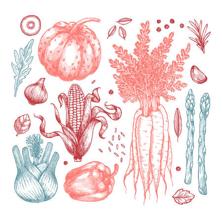 Fresh vegetables collection. Hand sketched vintage vegetables. Line art illustration. Vector illustration Ilustração
