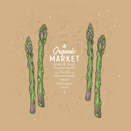 Colored asparagus design template. Organic vegetables. Vector illustration Illustration