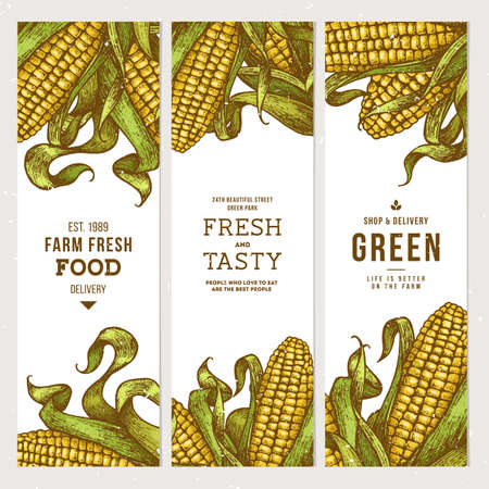 Corn on the cob vintage banners collection. Botanical corn. Vector illustration Stock Illustratie