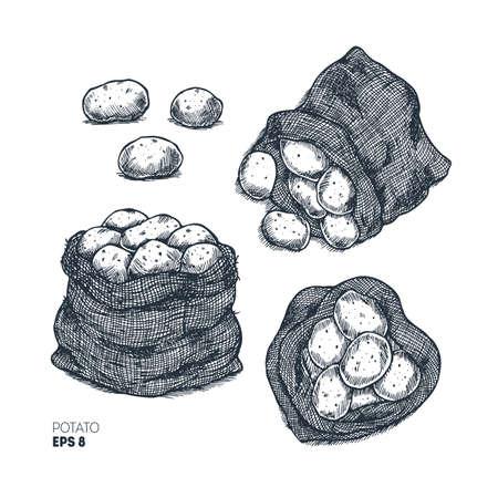 Potato engraved farm illustration. Bag of potatoes. Vector illustration