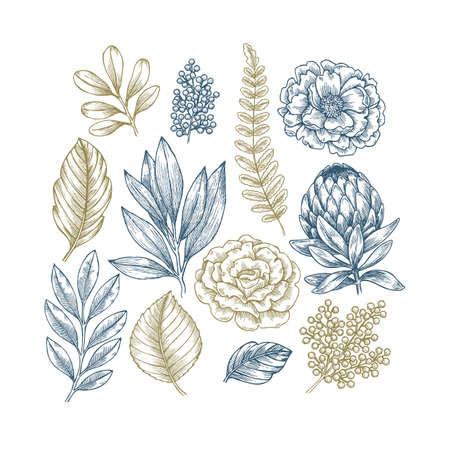 Collezione di piante e fiori disegnati a mano. Set di fiori incisi vintage. Illustrazione vettoriale