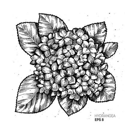 Hydrangea vintage illustration. Engraved style botanical flower illustration. Vector illustration Stock Illustratie