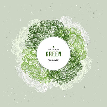 Fresh organic vegetables vintage engraved design template. Botanical cabbage illustration. Vector illustration Illustration
