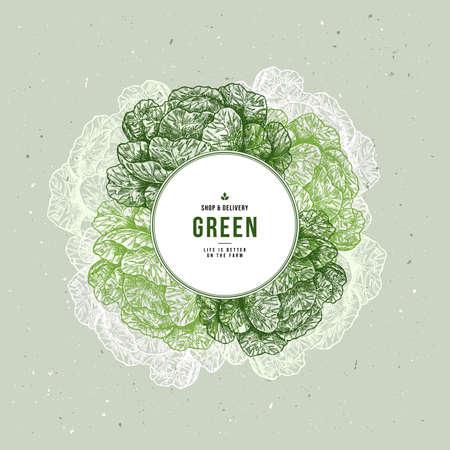 Modèle de conception gravé vintage de légumes biologiques frais. Illustration de chou botanique. Illustration vectorielle