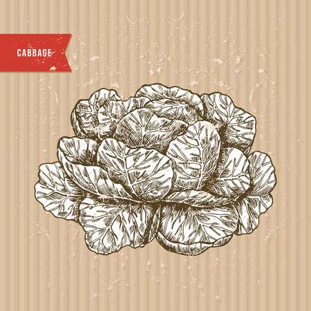 新鮮な有機野菜ヴィンテージ彫刻デザインテンプレート。植物キャベツイラスト。ベクトルの図
