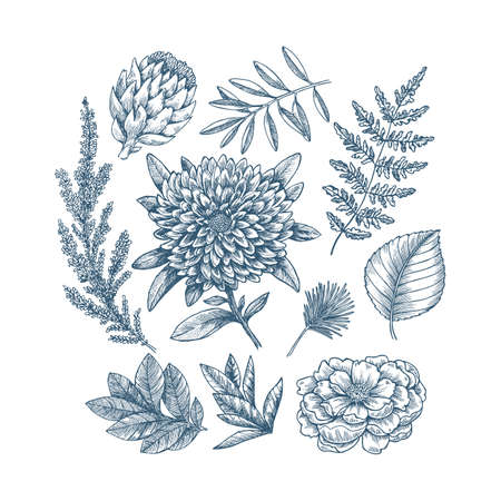Hand drawn plant and flower collection. Vintage engraved flower set. Vector illustration Illustration