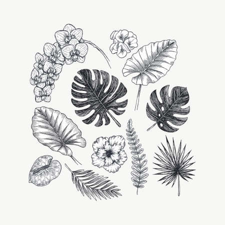Exotic flowers and leaves collection. Design kit. Botanical vintage illustration.
