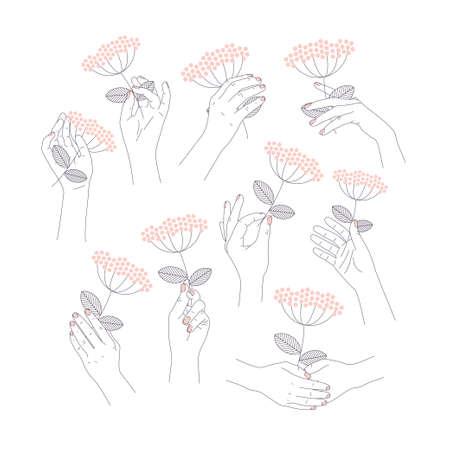 Woman hand set holding a beautiful flower. Feminine illustration. Vector illustration