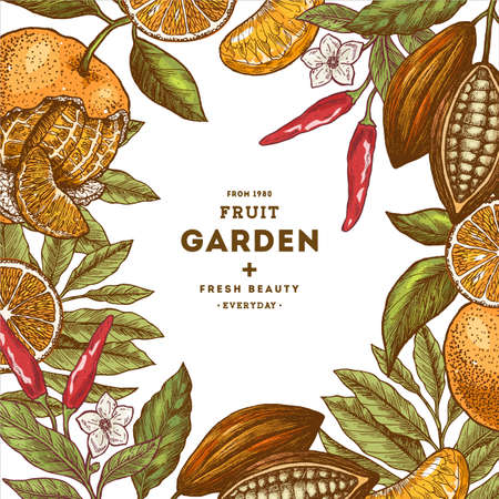 Aromatic food collection design template. Engraved style illustration. Tangerine, pepper, cocoa, chocolate. Vector illustration Illustration