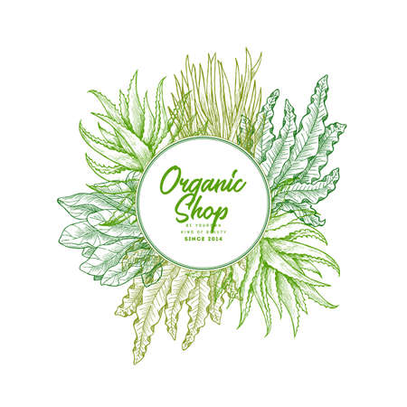 Super greens design template. Aloe, wheatgrass, spinach, spirulina (seaweed). Green plants. Vector illustration Illustration