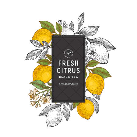 Lemon vertical colored design template. Engraved  botanical style illustration.