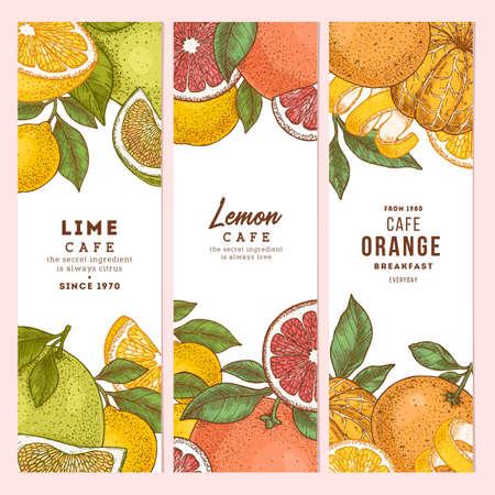Citrus colored vertical design templates collection. Engraved botanical style illustration. Vector Illustratie