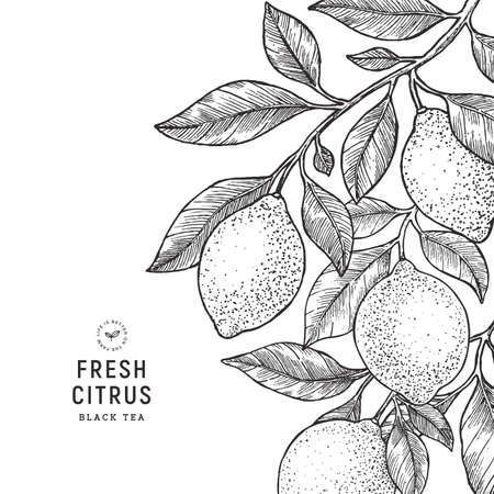 Modello di design vintage al limone. Illustrazione incisa in stile botanico. Vettoriali