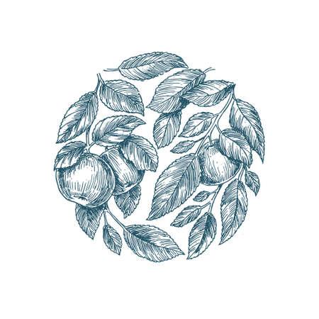 Apple tree background. Apple leaf engraved illustration.  イラスト・ベクター素材