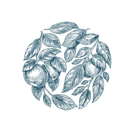Apple tree background. Apple leaf engraved illustration. 矢量图像