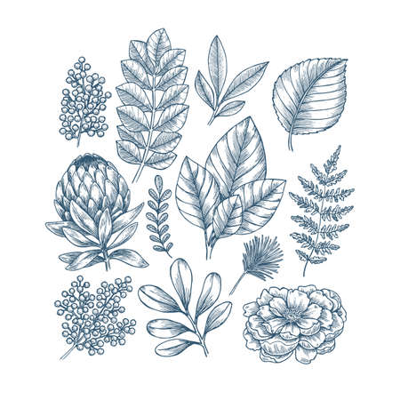 Hand drawn plant and flower collection. Vintage engraved flower set. Иллюстрация