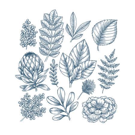 Hand drawn plant and flower collection. Vintage engraved flower set. Illustration