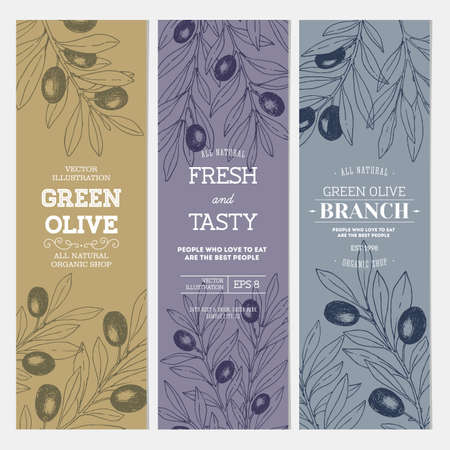 Olive branch banner collection. Design template. Stock Photo