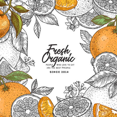 Citrus colored frame design template. Engraved style illustration. Orange, flowers, lemon, tangerine, grapefruit. Vector illustration