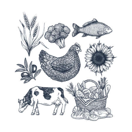 Vintage food collection. Cow, wheat, broccoli, fish, bread basket, chicken, olive. Vector illustration