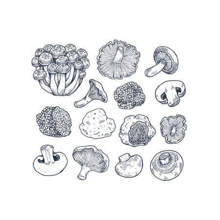 Various mushroom illustration collection. Vintage style. Vector illustration