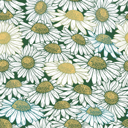 Daisy flower seamless pattern. Chamomile vintage floral background. Vector illustration