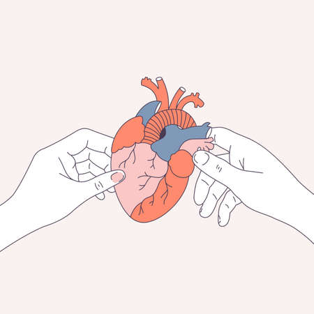 Couple hands holding an anatomical heart. Dating and relationship illustration. Vector illustration  イラスト・ベクター素材