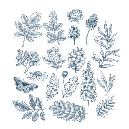 Flowers and leaves collection. Design vector kit. Botanical vintage illustration. Vector illustration Imagens - 129232659