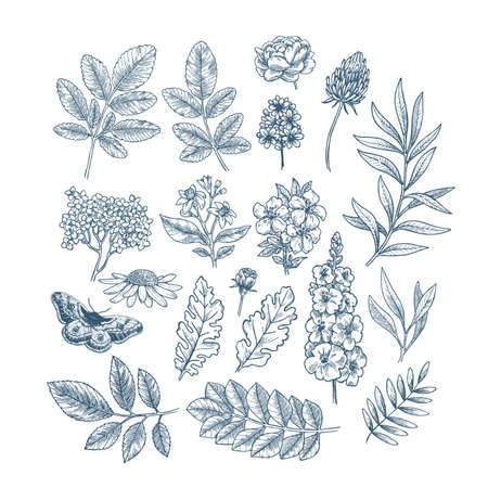 Flowers and leaves collection. Design vector kit. Botanical vintage illustration. Vector illustration Illustration
