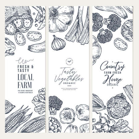 Farm vegetables banner collection. Top view. Growing concept. Organic fresh vegetables. Summer food concept. Vector illustration