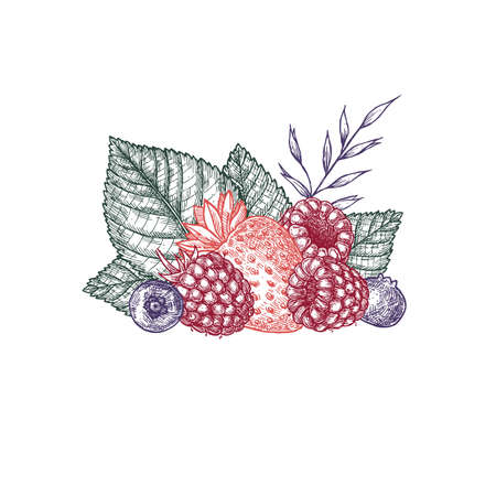Berries composition. Engraved style illustration. Strawberry, raspberry, blueberry. Vector illustration Ilustração