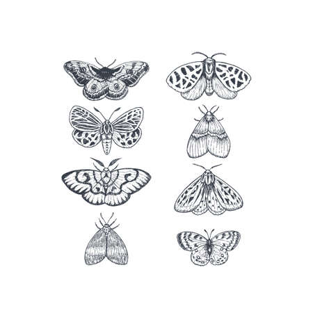 Butterflies and moths collection. Various butterfly set. Vector illustration