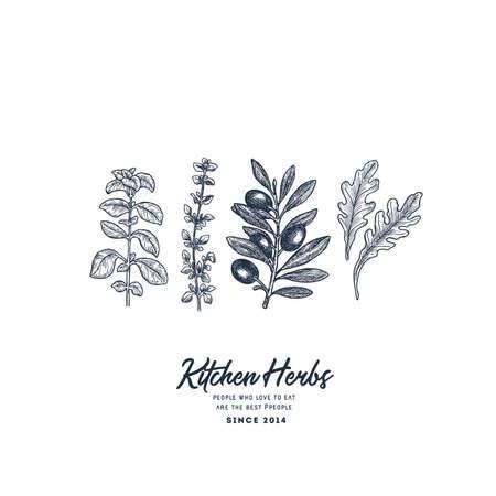 Kitchen herbs illustration. Oregano, thyme, olive, ruccola engraved vintage style. Vector illustration