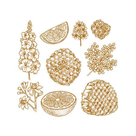 Various botanical elements. Honey, flower, citrus clices. Vector illustration