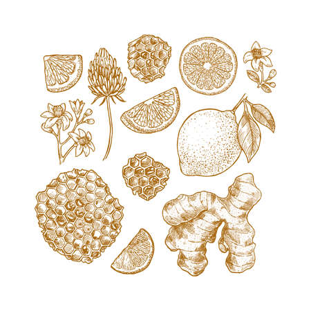 Various botanical elements. Honey, flower, citrus clices, ginger. Vector illustration