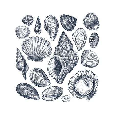 Seashell vintage collection. Engraved style set. Various shell forms. Vector illustration