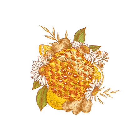 Honeycomb, chamomile, ginger and lemon colored composition. Honey and elements engraved vintage style. Vector illustration