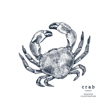 Vintage engraved crab illustration. High detailed sketch. Vector illustration Ilustrace