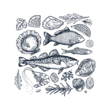 Seafood collection. Engraved vintage sea restaurant set. Fish, prawn, seashell, herbs. Vector illustration