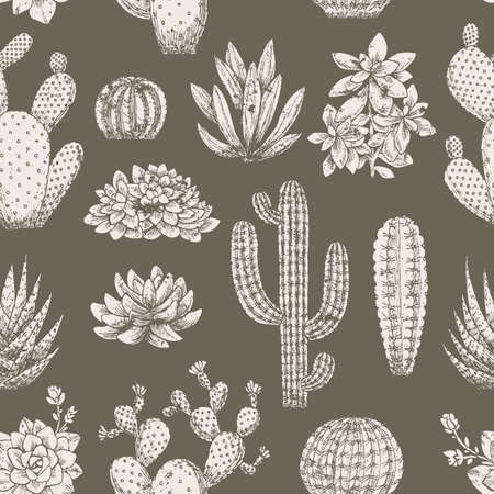 Cactus vintage seamless pattern. Sketchy style illustration. Succulent collection.  illustration
