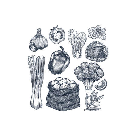Various farm food collection. Fresh vegetables. Organic food. illustration