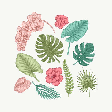 Colored exotic flowers and leaves collection. Design kit. Botanical vintage illustration.