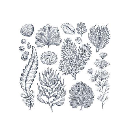 Seaweed collection. Engraved vintage sea plants, shells, pearls. Vector illustration Illustration