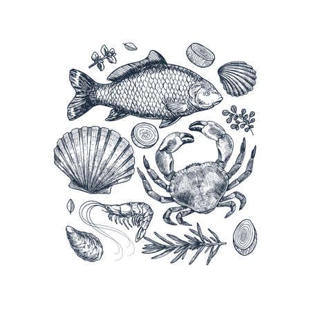 Seafood collection. Engraved vintage sea restaurant set. Fish, seashell, crab, shrimp, herbs. Vector illustration