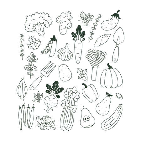 Collection of plants and vegetable illustrations. Organic fresh collection. Scandinavian style. Vector illustration Illustration