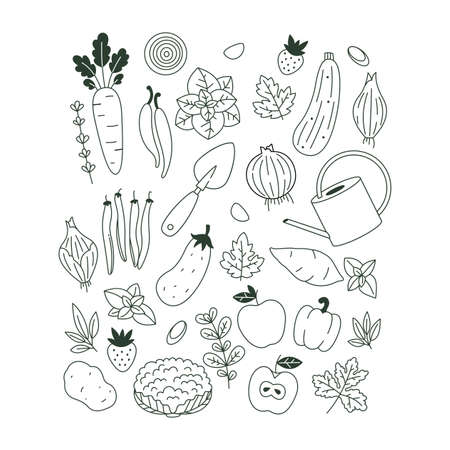 Collection of minimalist plants and vegetable illustrations. Organic fresh collection. Scandinavian style.