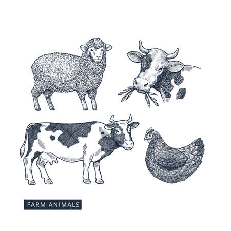 Farm animals collection. Cow  sheep  chicken engraved vintage illustration. Vector illustration Vectores