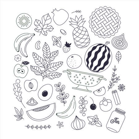 Various fruits collection. Linear graphic. Minimal illustration. Scandinavian style. Healthy food.